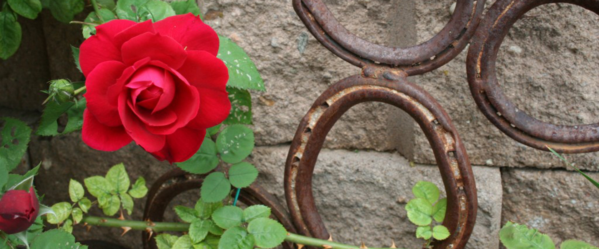 Rose And Horseshoes