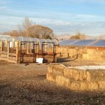 Grand Junction Vermicompost Site